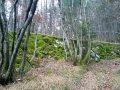Muri di vecchi campi nel bosco di patocco