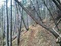 Sentiero Patocco-Chiout Cali con alberi caduit