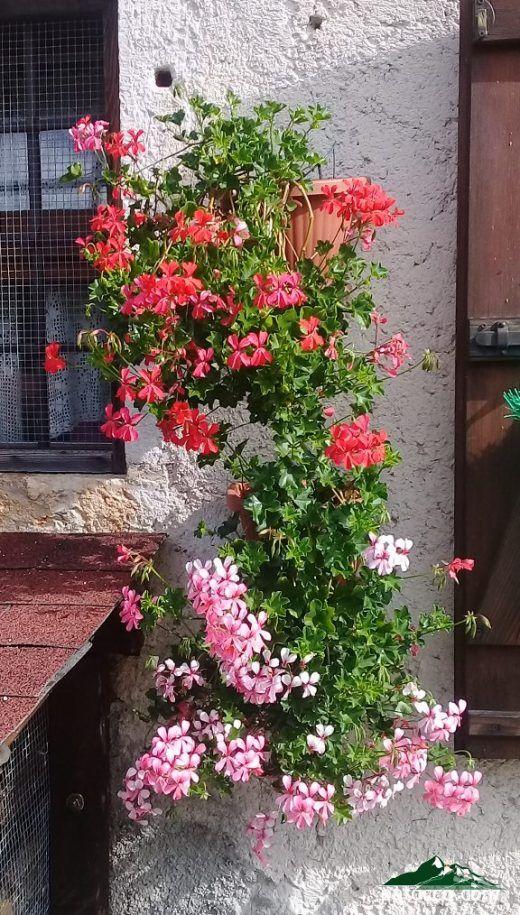 Parigini - flowers in Patocco